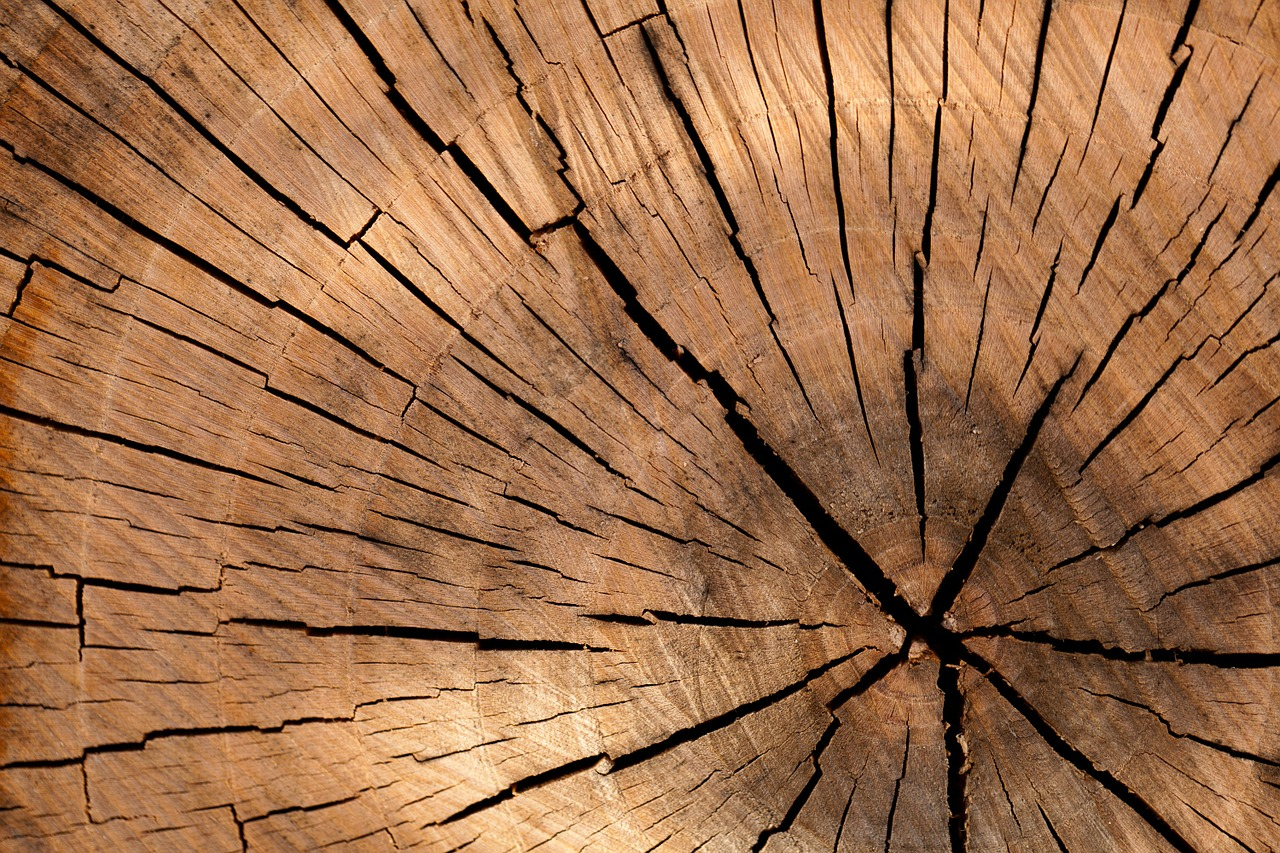 Lumber Futures Explained (LB) – Contract Specifications, Facts, Seasonality, and Trading Strategies