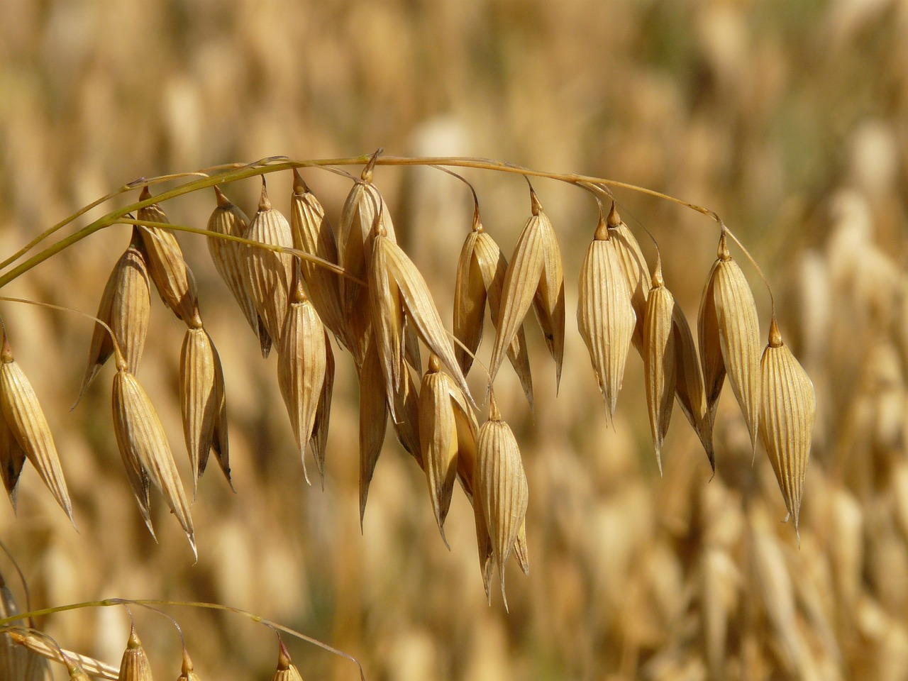 Oats Futures Guide – Contract Specifications, Charts, Seasonality and Trading Strategies