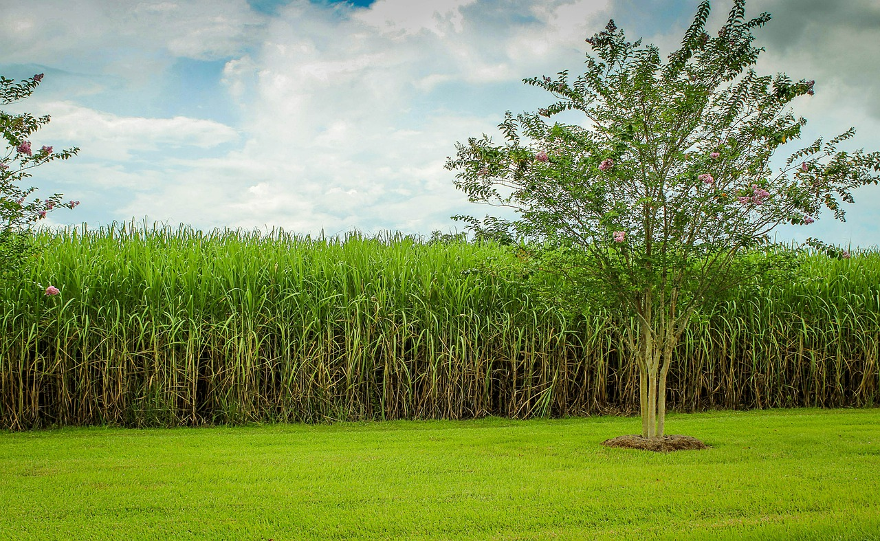 Sugar Futures – Contract Specification, Facts, Seasonality & Strategies
