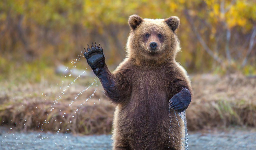 Bear Market Examples