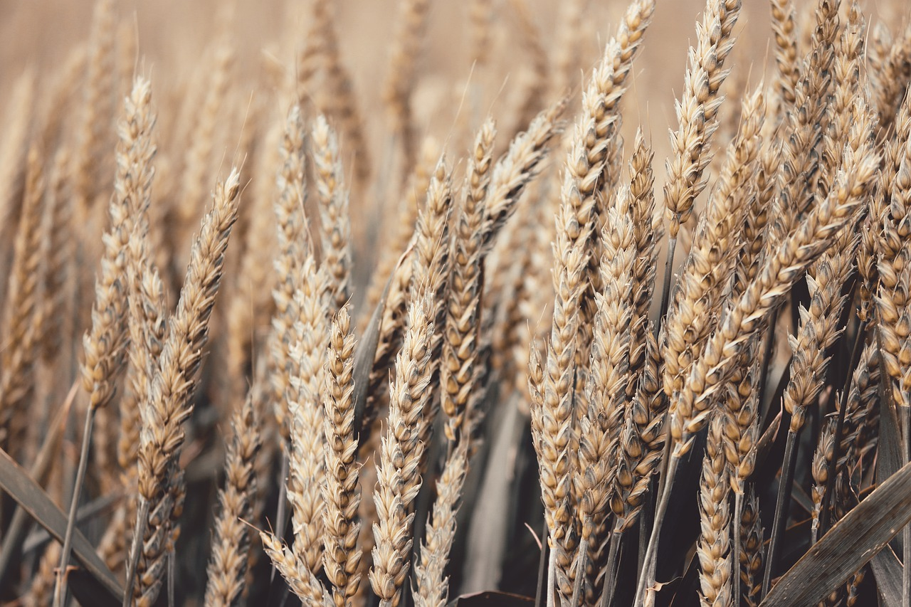 Wheat Futures – Futures Contract Specifications, Seasonality, and Trading